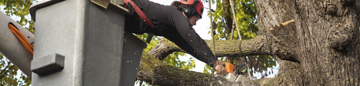 Savannah Ga Tree Triming & Removal Services